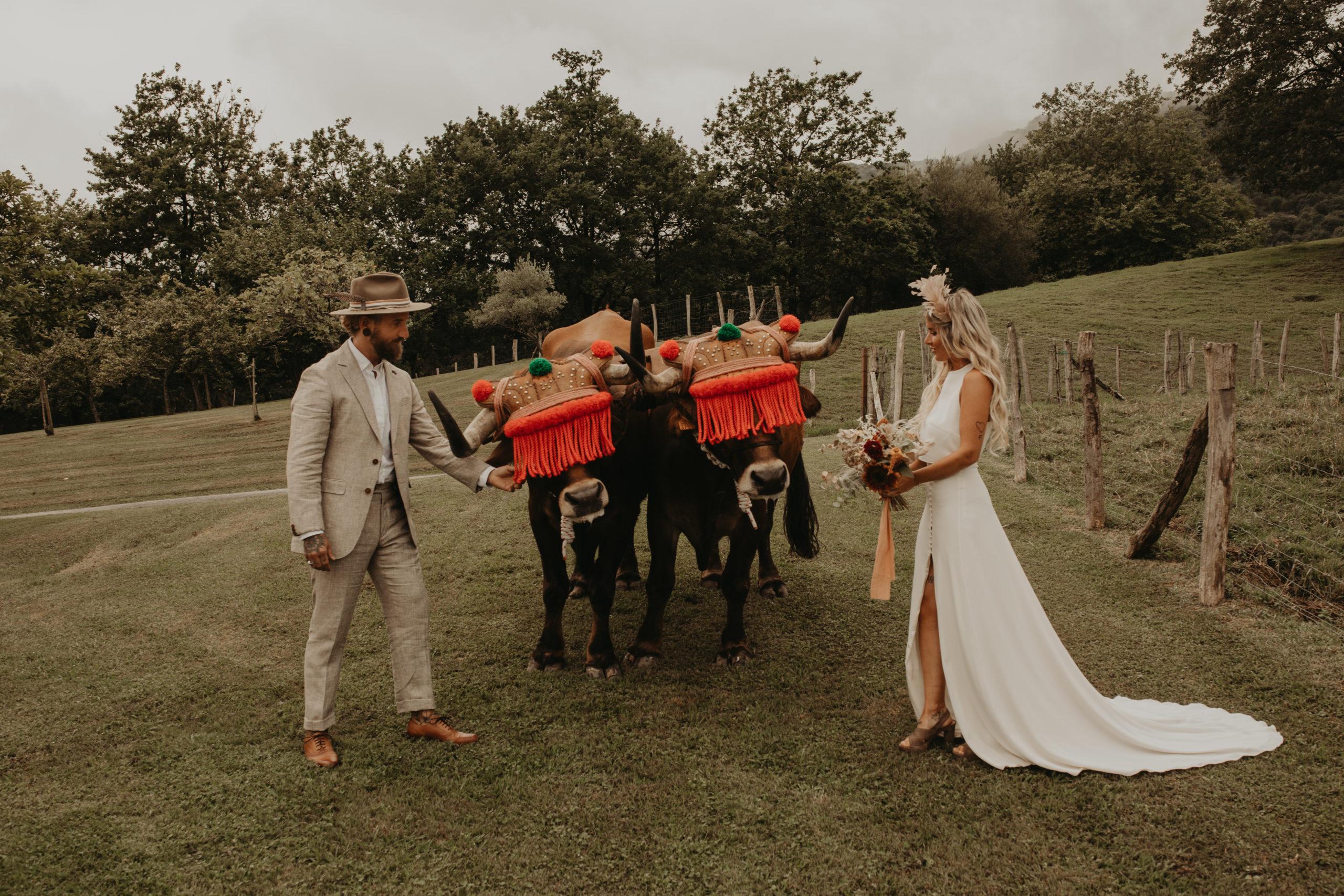 Llegada de los novios en bueyes a la boda